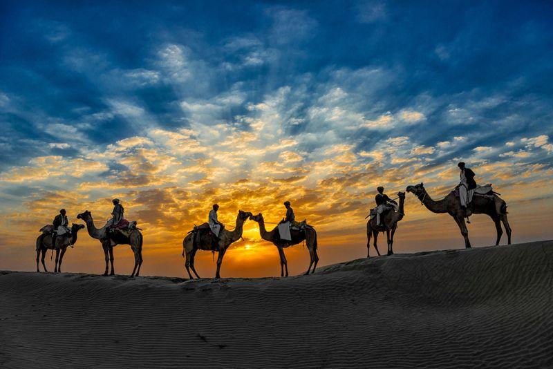 Camels, Nguyen  Minh , Usa