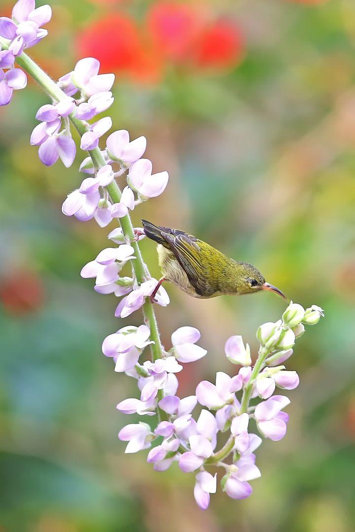 Collect Nectar, Mak  Yiu Tung , Hong Kong