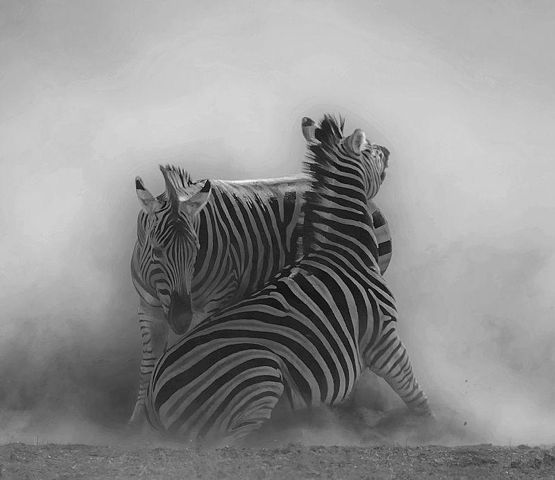 Hostile, Du Toit  Treurnicht , South Africa