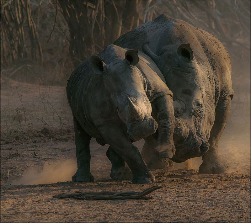 Discipline Is Universal, Du Toit  Treurnicht , South Africa
