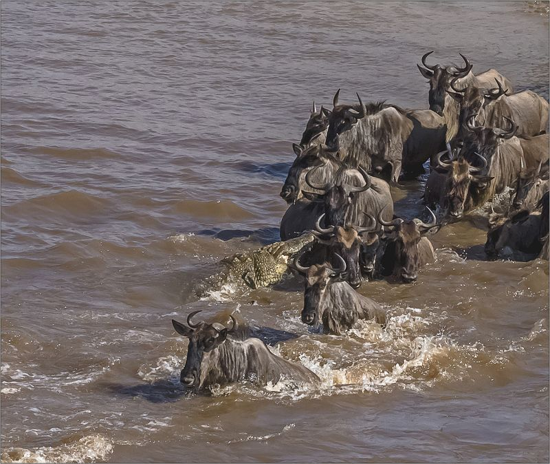 Fearsome Crossing, Du Toit  Treurnicht , South Africa