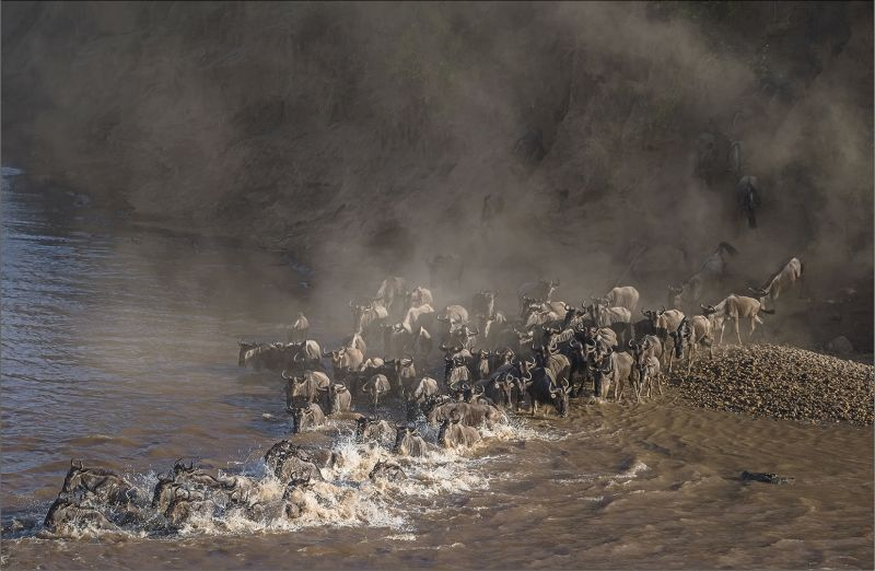 Stampede Across Mara River, Du Toit  Treurnicht , South Africa