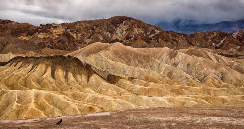Death Valley Bird, Braunstein  Michael , Usa