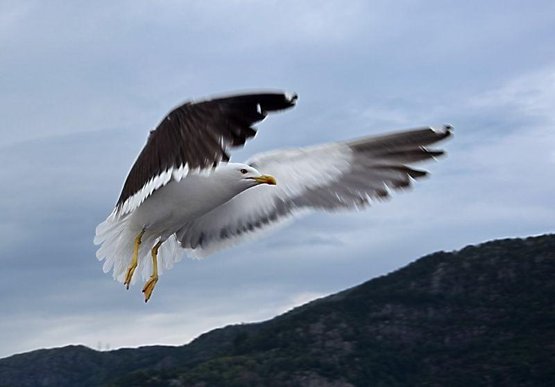 Fly Away, Hadjipavlou  Thanasis , Cyprus