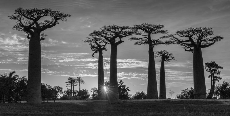 Baobab Sunset, Kleindienst  Valerie , Australia