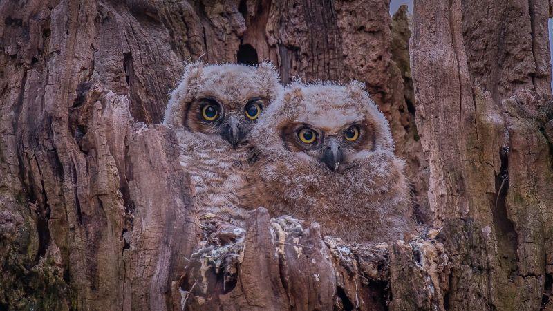 Baby Owls In The Morning, Fan  Jin , Usa
