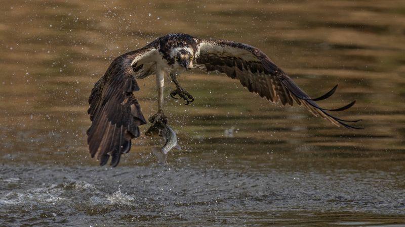 Lifting Fish From Pond, Fan  Jin , Usa