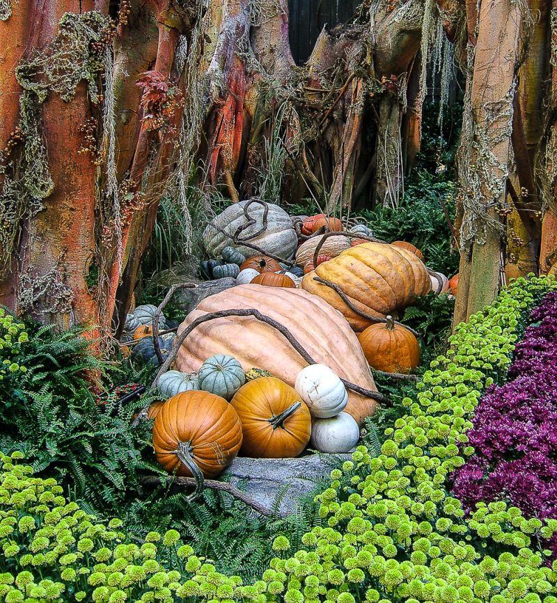 Pumpkin-patch, Mclaughlin  Ed , Usa