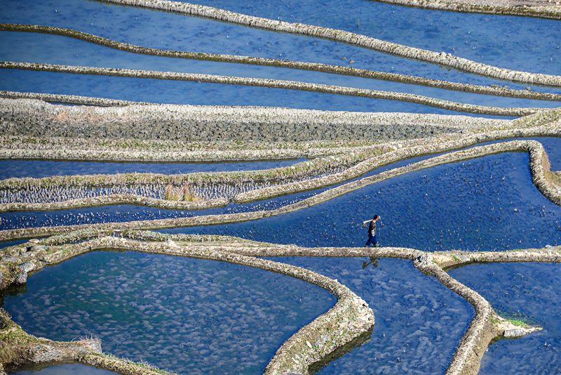 FINISH FARMING, Wong  Yuet Yee , Hong Kong