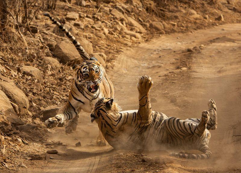 Territorial Fight 2, Huilgol  Ajit , India