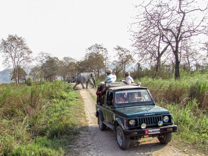 An Elephant Of Kaziranga, Karmakar  Sanat Kumar , India