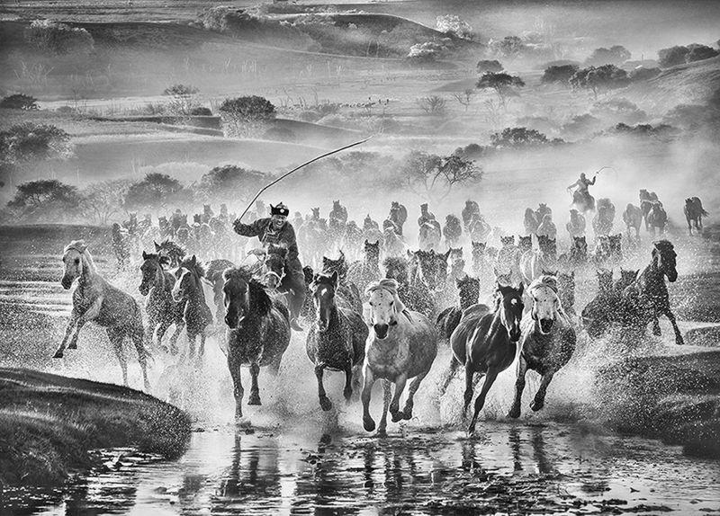 Running Horse 10, Che  Arnaldo Paulo , Hong Kong