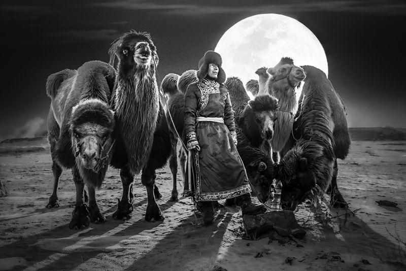 The Prairie Night, Tong  Jiangchuan , China