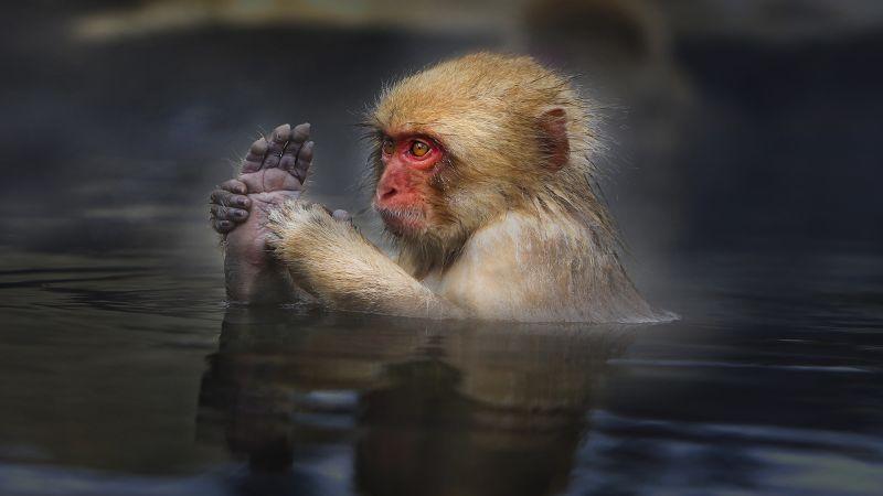 Ho Spring Monkey, Ng  Lai Huat , Singapore