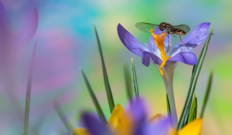 Springtime, Schmitz  Willi , Germany
