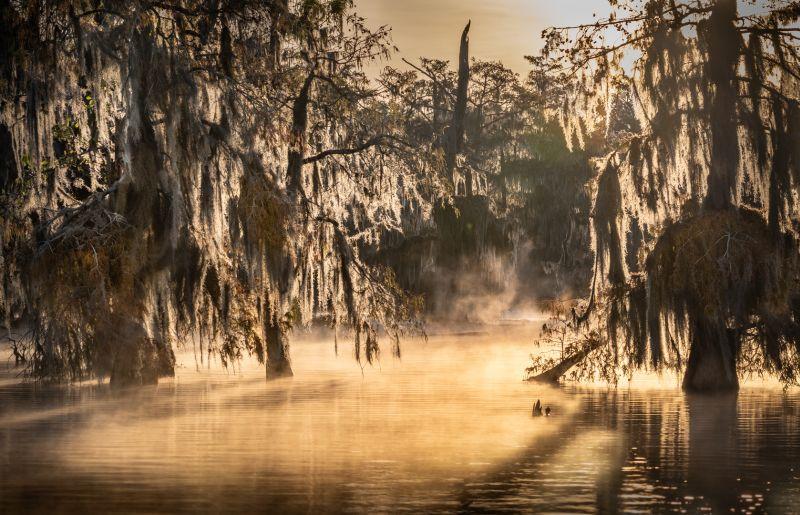 Mist In The Marshes, Poggioni  Angela , Usa