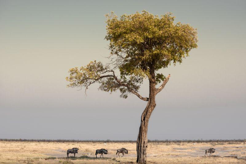 Tree And Wild Beasts, Poggioni  Angela , Usa