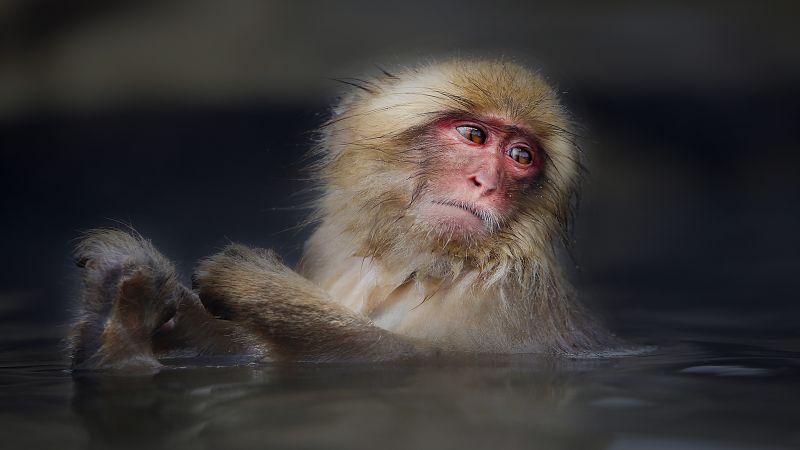 Snow Monkey, Ng  Lai Huat , Singapore