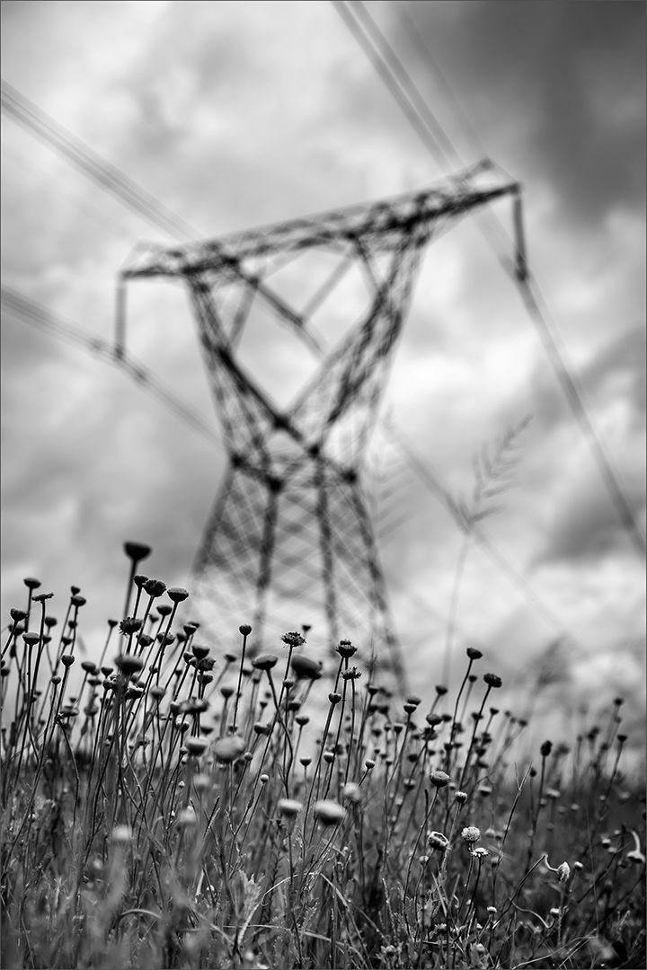 The Power Runs Through, Murray  Vivienne , South Africa