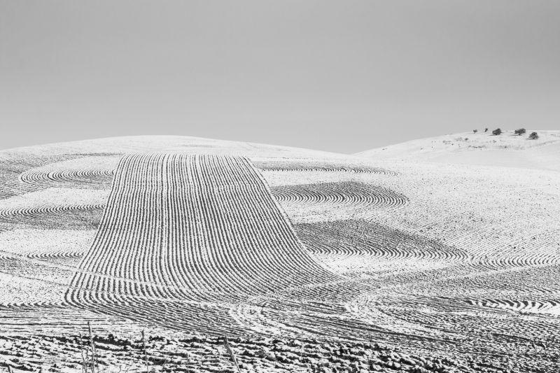 Palouse Field Pattern, Sokolsky  Oleg , Usa