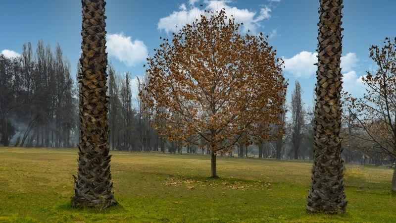 Fall, Sanguinetti  Hajime , Chile