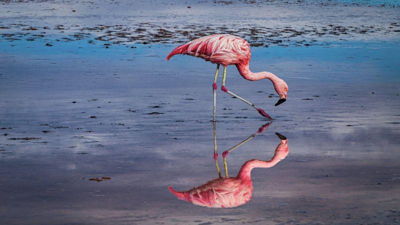 Perfect Reflection, Sanguinetti  Hajime , Chile