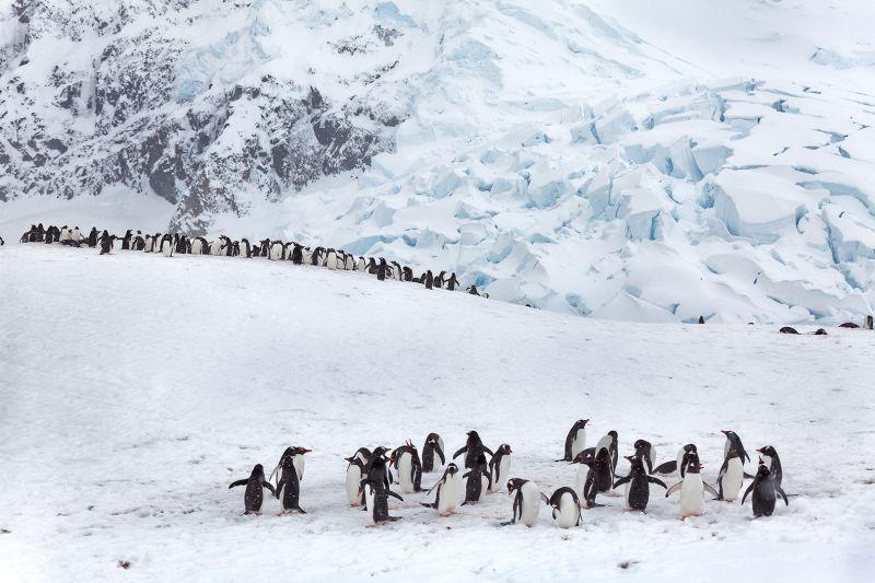 Neko Harbor Antarctica 18, Meinberg  Volker , Germany