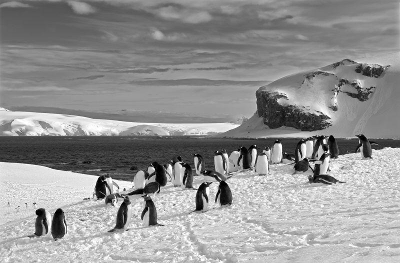 Trinity Island Antarctica 6, Meinberg  Volker , Germany