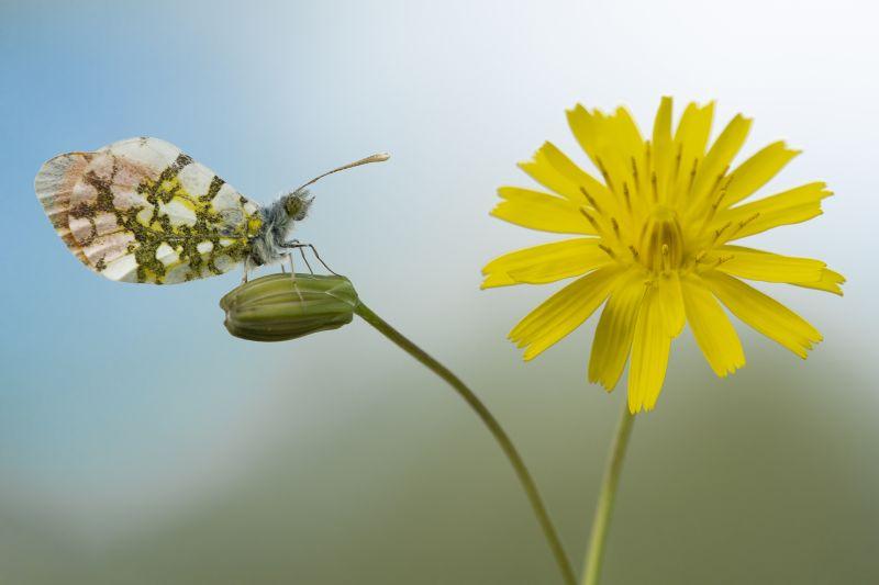 Yellow Yellow Flower, Amer  Eyal , Israel