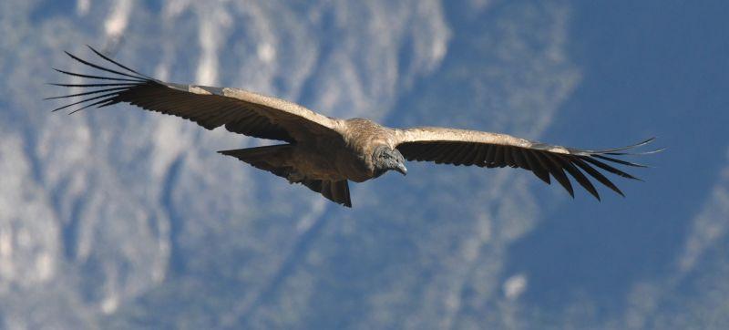 Flight Of The Condor 13, Whitty  Chris , England