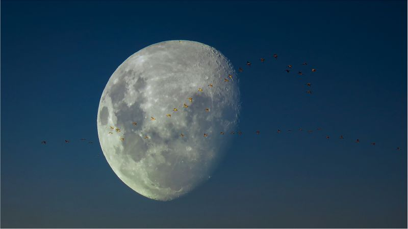 Moon With Ibis, Wilson  David , South Africa