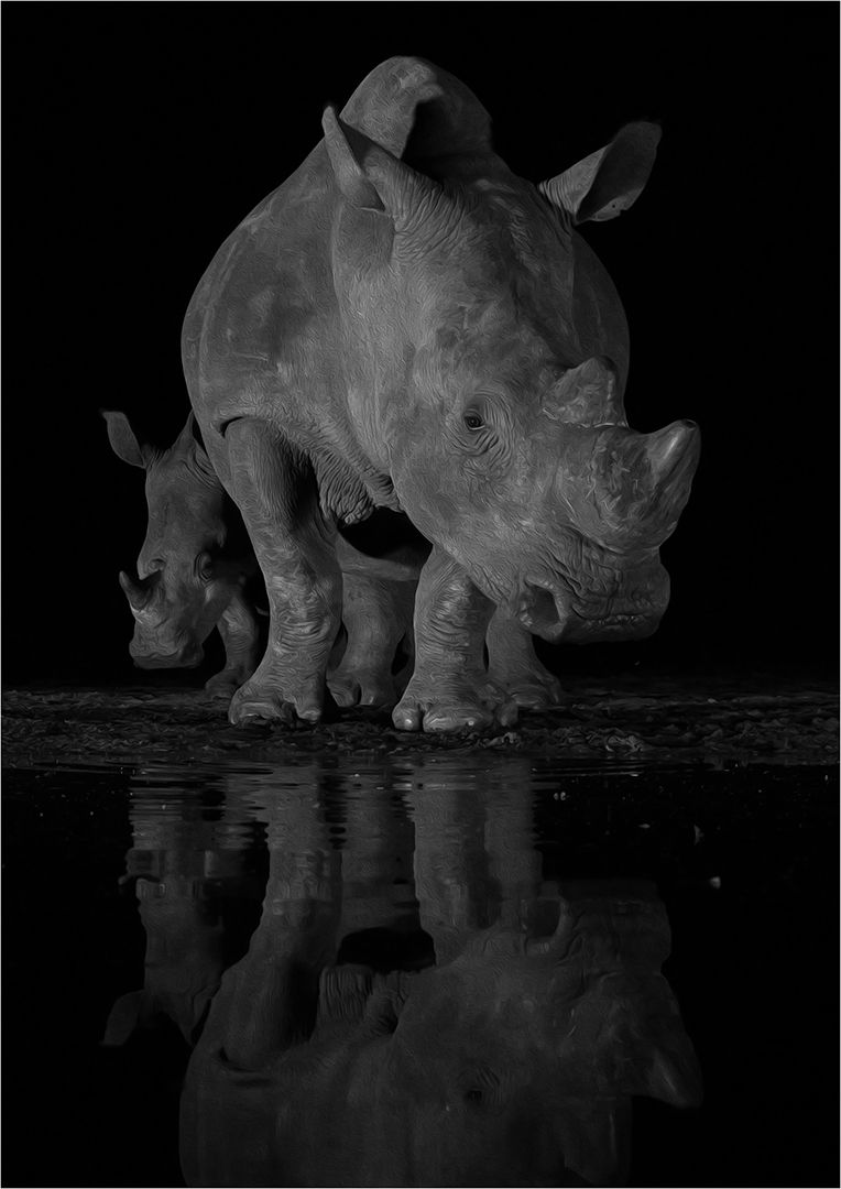 Rhinos At Waterhole, Wilson  David , South Africa