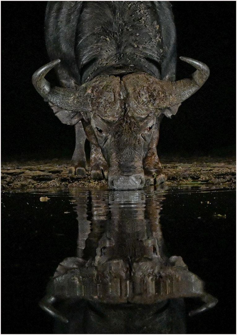 Night Drink, Wilson  David , South Africa