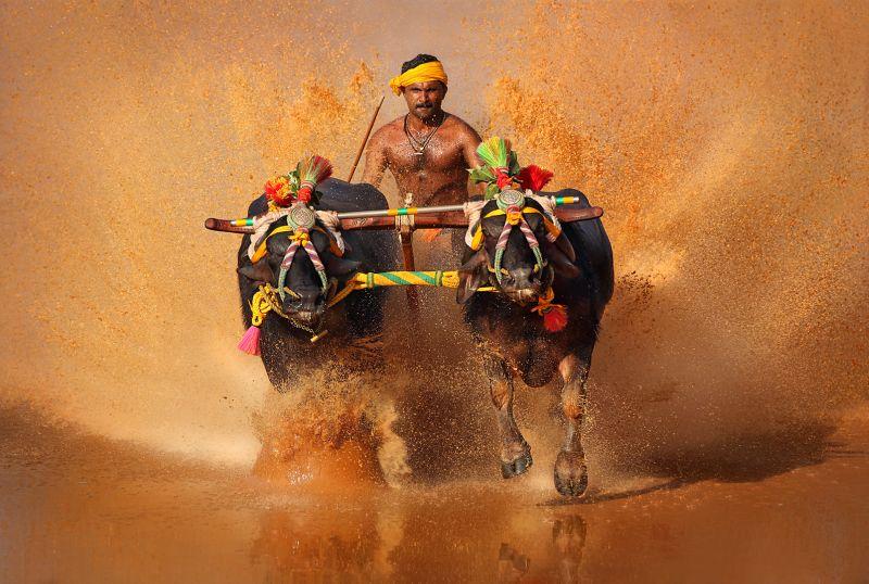 Race With Pets, Kumar  Ashok , India