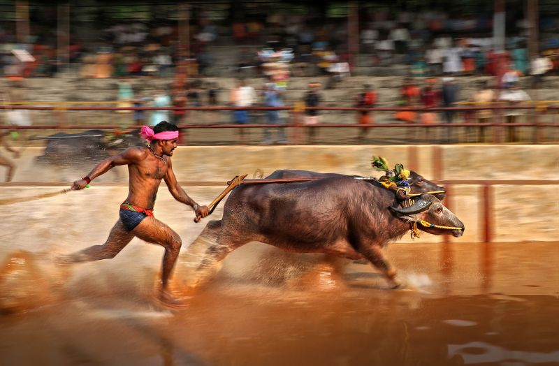 Speed, Kumar  Ashok , India