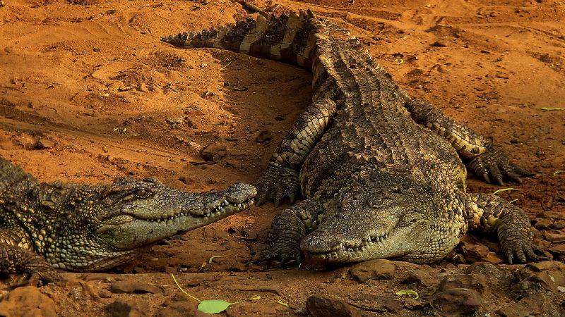 Two Crocodiles, Das  Tuhin Kanti , India