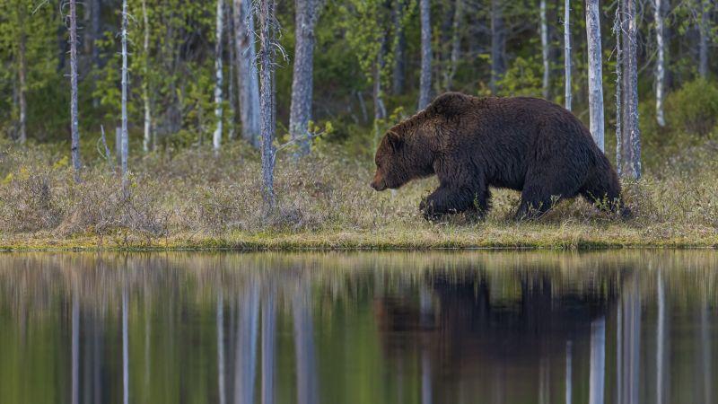 Big Guy, Korpela  Antti , Finland