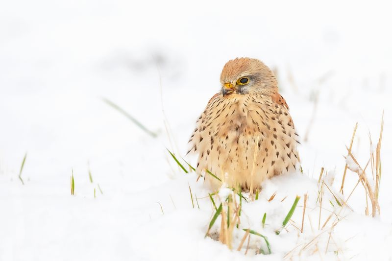 Too Cold To Fly, Schulz  Ruediger , Germany
