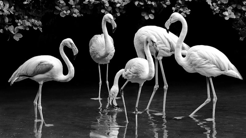 Flamingo Family, Murphy  Cheryl , Australia
