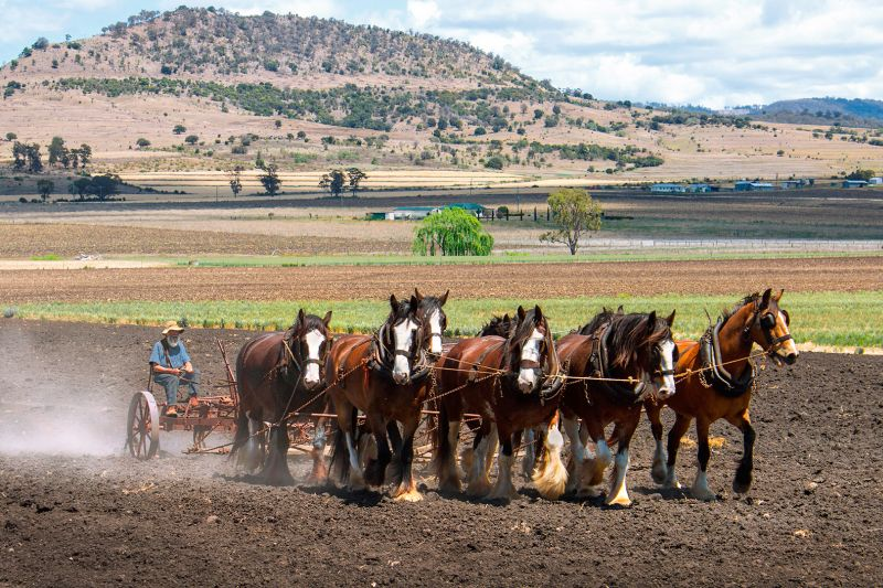 Eight Horses Plowing, Murphy  Cheryl , Australia