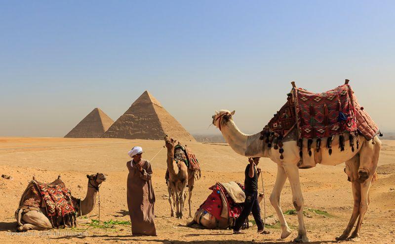 Camel Train, Clare  John , England