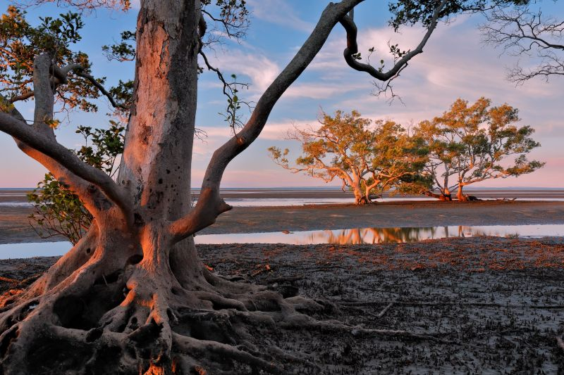 Nudgee Beach Mangroves Dusk, Cannon  Wally , Australia