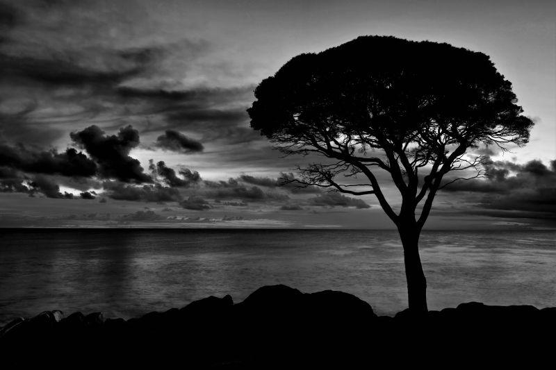 Bunker Bay Dawn, Cannon  Wally , Australia