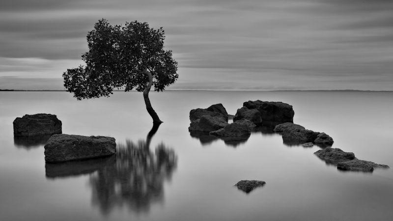 Deception Bay Lone Mangrove, Cannon  Wally , Australia