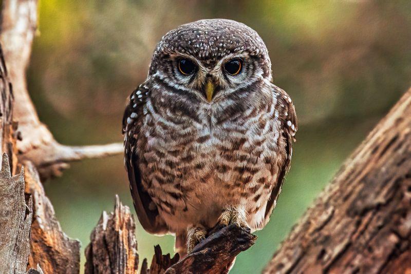 Lovely Large Eyes, Bs  Venkatesh , India