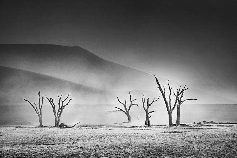 Dead Trees Under Sandstorm, Chan  Ching Ching , Hong Kong