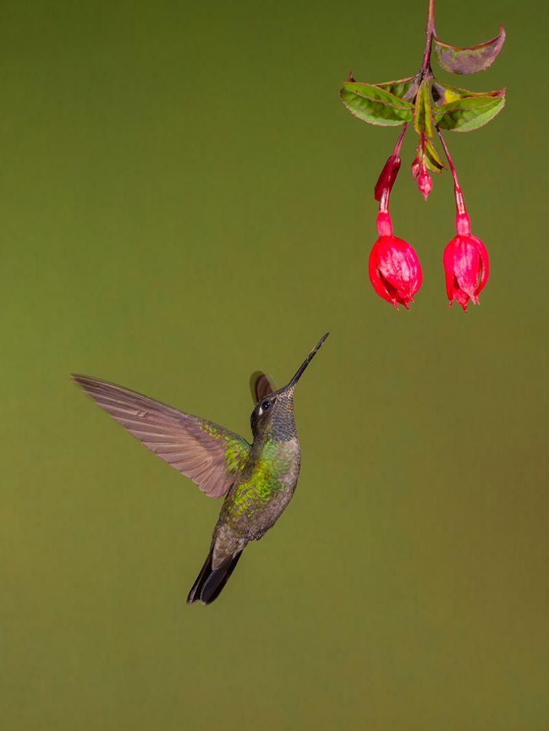 Love For Nectar, Sinha  Barun , India