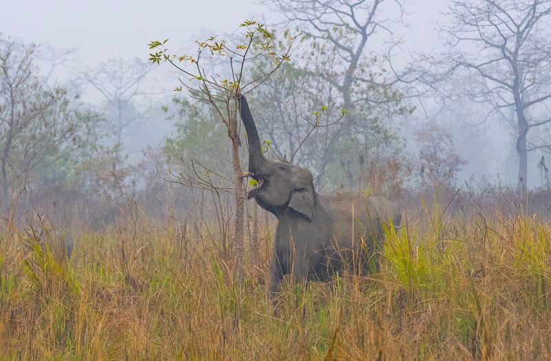 Pachyderm Feeding_0147, Sinha  Barun , India