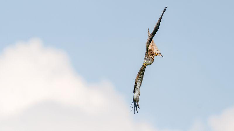 The Call Of The Kite, Gilbert  Tim , England