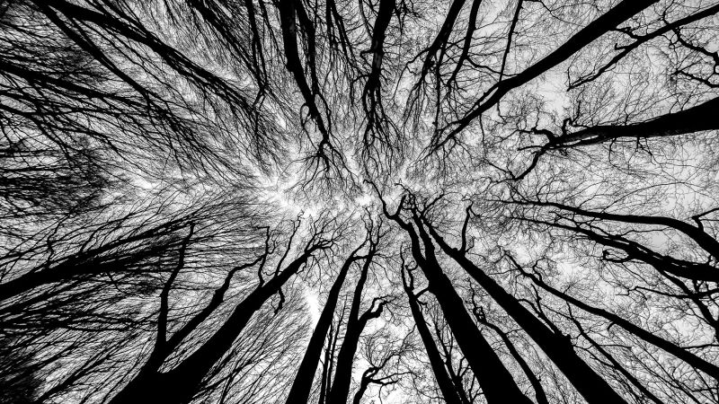 Enchanted Forest, Balantic  Peter , Slovenia